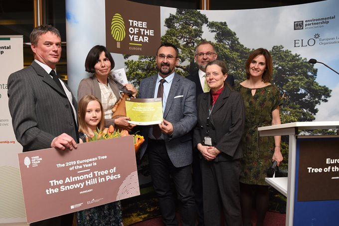 We are a proud organizer and supporter of the Tree of the Year Awards all around the world. Photo by ELO